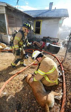 Fort Worth firefighters revive a unconscious dog pulled from a burning home. | Shared by LION