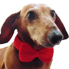 Knitted collar bow for dog catcollar bow for dog cat Dachshund Clothes, Mini Dachshund, Pet Clothes, Dog Lover Gifts, Dog Gifts, Dog Lovers, Winter Knit Hats, Summer Knitting, Yorkie