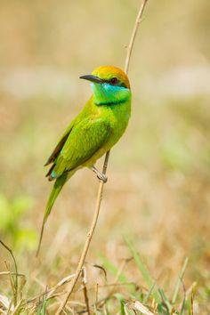 Pretty Green and Yellow Bird