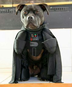 .maybe a whole pet kinda Star Wars thing…hmmm. This guy looks like he has the right attitude...