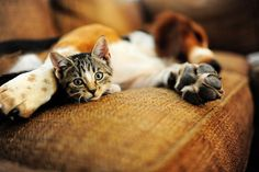 Kitty & Charlie