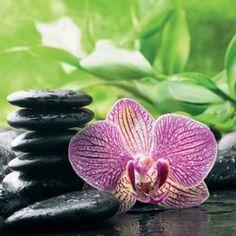 Image pour tableau 3D - Format 30x30 cm DM337833 Orchidée rose
