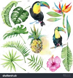 Watercolor tropical set with pineapples,  toucan birds palm leaves and flowers. Hand drawn watercolor images, icons Tropical summer vacation