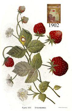 Carlson Currier XXX 1902 by Embroiderist, via Flickr