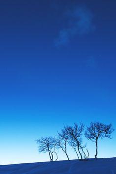 Blue Trees   AE
