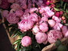 Do Something: Columbia Road Flower Market - essiebutton