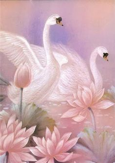 Swan teaches us to learn to surrender to the grace of the rhythm of the universe, and slip from our physical bodies into the dreamtime. It teaches us to be at one with all planes of consciousiness, and to trust in Spirit's protection.