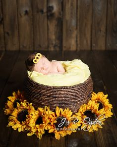 Newborn in basket with sunflowers - Bangor Maine Newborn Photography