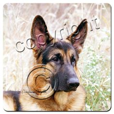 German shepherd coaster