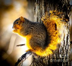 What better portrait than mother nature's creatures! Early Morning Glow by Optical Playground by MP Ray