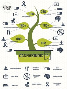 When it comes to cannabis, there is so much more than meets the eye. As any cannasseur knows, the mysteries of the herb are often solved when looking at its chemical blueprint. The rise of regulatory marijuana testing provides us with a closer look at the chemical profile of each strain, but what are we looking for in these tests and what is their purpose? #cannabinoids
