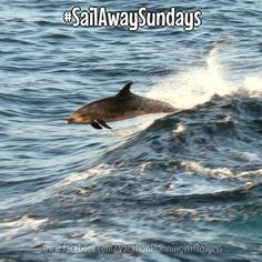 When sailing on a Disney cruise don't forget to periodically look out your porthole or veranda especially if the ship is pulling out of port. You never know what friendly sea creatures might be trying to say hi on #SailAwaySundays