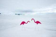 Unexpected Antartica Photography by Gray Malin-3