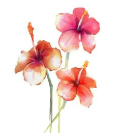 Red Hibiscus watercolour from $34.99 | www.wallartprints.com.au #WatercolourPainting