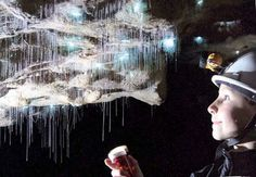 360 Amazing: Luminescent Glowworms Illuminate Caves