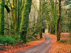 landscapes nature trees autumn roads  / 1600x1200 Wallpaper