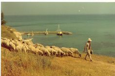 In the 1970's before tourists came to the area a shepherd was taking his goats for a walk on Agios Stefanos Beach.