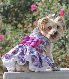 4abd1457 Dog Costumes, Dog Design, Red Floral Dress, Purple Dress, Dog Dresses,