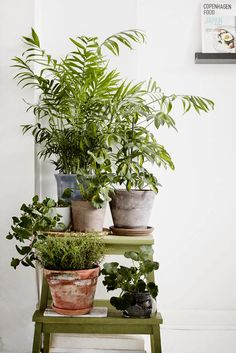 indoor plants on a ladder