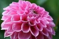 the color pink - Google Search