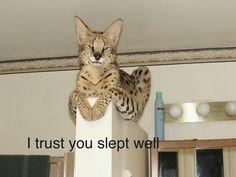 I trust you slept well.
