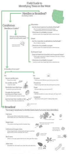 an infographic showing several steps to identifying common trees