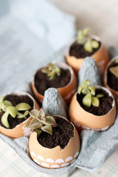 A cute and simple Easter gift #DIY: Plant tiny succulents in eggshells. /ES
