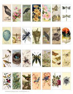 Domino Nature Clip Art Sheet