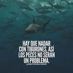 Hay que nadar con tiburones, así los peces no serán un problema Text Quotes, Love Quotes, Mexican Quotes, Quotes En Espanol, Millionaire Quotes, Spanish Quotes, Life Motivation, Gods Love, Personal Development