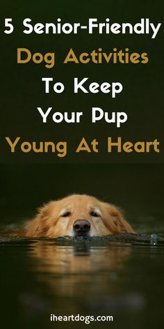 Your senior pup will thank you for this!