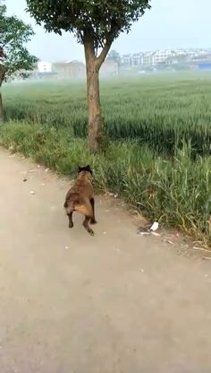 A dog that can climb trees! A dog that can climb trees! A dog that can climb trees! Cute Animal Videos, Funny Animal Pictures, Cute Funny Animals, Cute Baby Animals, Dog Pictures, Animals And Pets, Funny Dog Videos, Funny Dogs, Cute Dogs