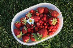 Červen prostě patří jahodám... a jahodovým koláčům, palačinkám s jahodami, jahodové dřeni i jahodám se šlehačkou. Strawberry, Home And Garden, Landscape, Fruit, Landscaping Ideas, Food, Diy Landscaping Ideas, Scenery, Essen