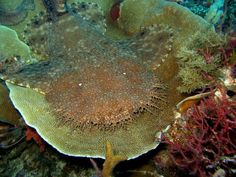 Carpet Shark. Raja Ampat, West Papua.