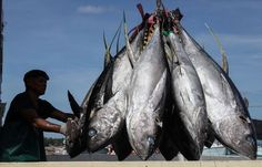 Yellowfin Tuna Photo by Adrian Bautista -- National Geographic Your Shot