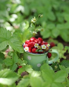 Strawberry Farm, Strawberry Shortcake, Sensitive Plant, Strawberry Fields Forever, Beautiful Fruits, Wild Strawberries, Summer Berries, Little Red, Fruits And Vegetables