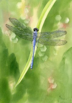 This giclee print catches a blue dragonfly on a daylily leaf and beautiful wet watercolor background.It will be printed on Arches Hotpress watercolor paper, backed with matboard and sealed in a clearbag. Blue Dragonfly, Dragonfly Tattoo, Dragonfly Painting, Dragonfly Insect, Dragonfly Symbolism, Dragonfly Quotes, Photo Animaliere, Beautiful Bugs, All Nature