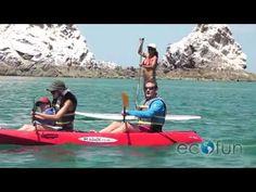 Eco Fun Rentals, family trip kayaking across Bird Island in Puerto Peñasco, Sonora (HD) - http://www.nopasc.org/eco-fun-rentals-family-trip-kayaking-across-bird-island-in-puerto-penasco-sonora-hd/