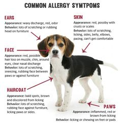 Ever thought that maybe your pet needs Claritin, too? Read more before treating them as you would yourself!