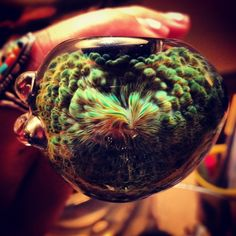 Amazing design on my favorite piece of glass #cannabis #seeds