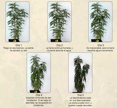 Healing Herbs, Ganja, Hydroponics, Weed, Medicine, Indoor, Plants, Mj, Gardens