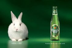 Carlsberg ads - Probably a rabbit. Probably the best beer in the world! International Beer Day, Beer Commercials, Visual Metaphor, Commercial Ads, Best Ads, Beer Humor, Creative Advertising, Best Beer, Slogan