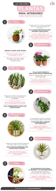 Cactus Plants, Garden Plants, House Plants, Plantas Indoor, Eco Garden, Home Grown Vegetables, Inside Plants, Plants Are Friends, Green Life
