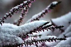 Erika im Schnee, Winterbilder mit Schnee und Eis