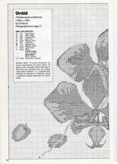 Gallery.ru / Фото #37 - Орхидеи - mornela