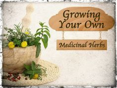 Growing Your Own Medicinal Herbs - Having a living and renewable medicine cabinet is something every prepping family should consider having. People have been growing medicinal herbs for thousands of years and many of the medications today are derived from botanicals.