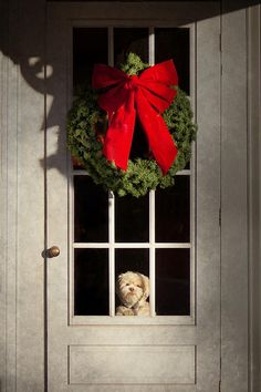 A simple Christmas wreath and an adorable puppy peering through the window