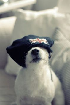 Jack Russell looking cute & sporty with British flag tossel covering its eyes.