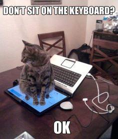 cat takes initiative