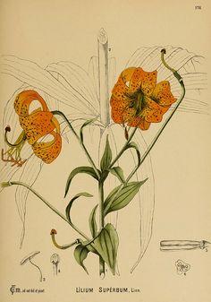 n1000_w1150, American medicinal plants New York, Boericke & Tafel, c1887.