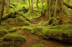 Why is the Tongass National Forest so important? Amazon South America, Bamboo Forest Japan, Crooked Forest, Humboldt Redwoods State Park, Tongass National Forest, Black Forest Germany, Ketchikan Alaska, Daintree Rainforest, Forest Of Dean